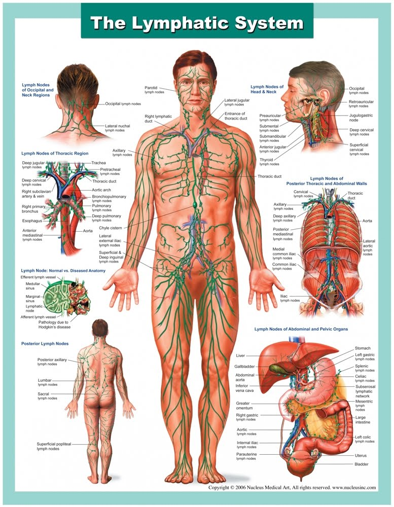 Manual Lymphatic Drainage Massage Unwind Myotherapy